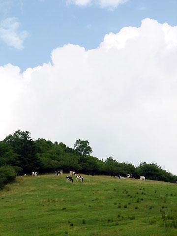 入笠山の牛さん