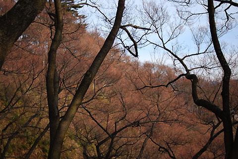高遠城址公園、桜の近況(2009/3/29)