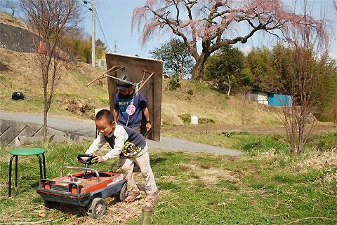 笹見平のしだれ桜(下伊那郡豊丘村)
