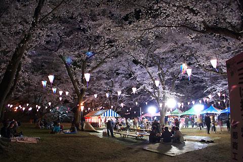 春日公園の夜桜(伊那市)