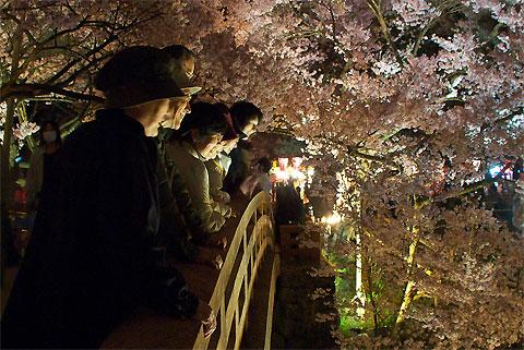 高遠城址公園の夜桜(伊那市)