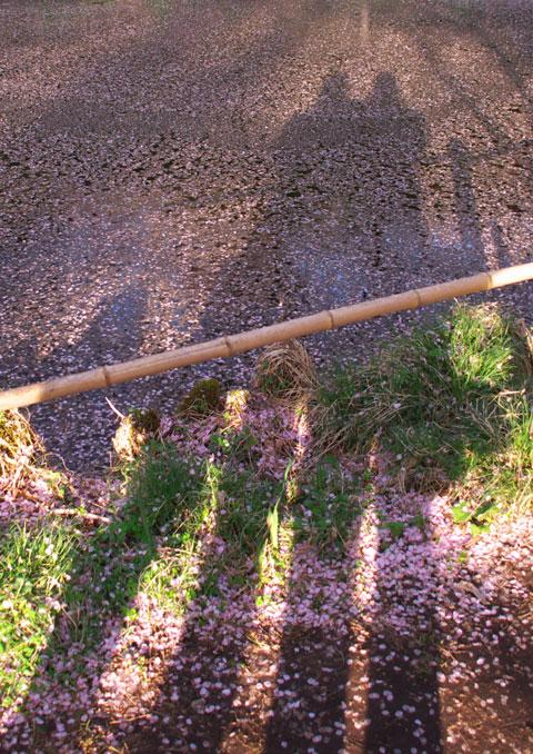高遠城址公園の桜、桜のあと(伊那市)