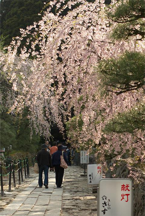 光前寺の桜(駒ヶ根市)