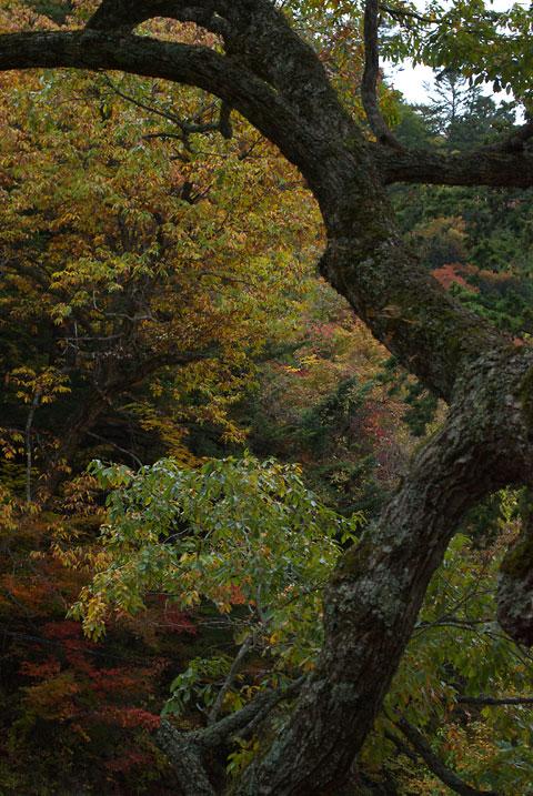 紅葉(木曽郡王滝村自然湖)