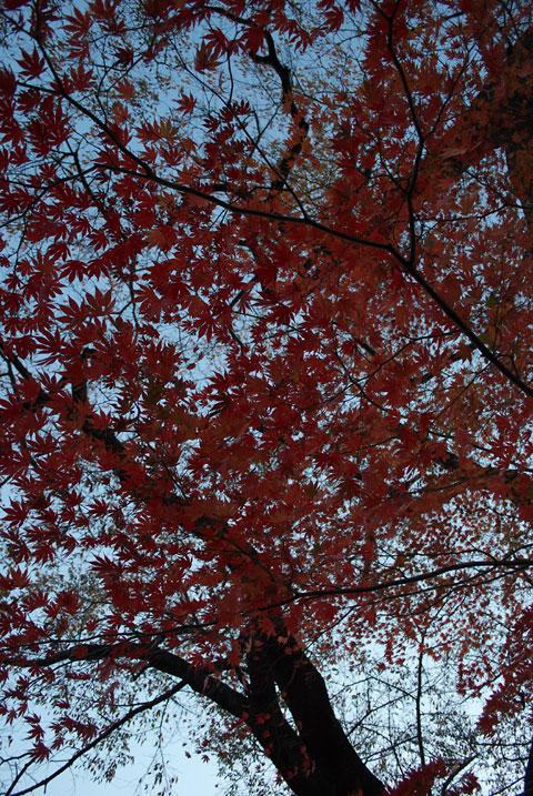 紅葉、春日公園(伊那市)