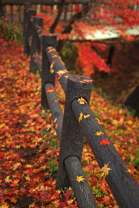 高遠城址公園の紅葉