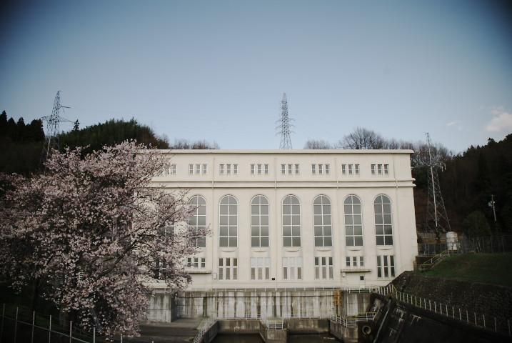 中部電力南向発電所の桜(中川村)