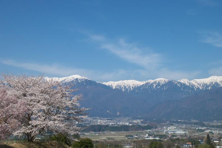 栖林寺近隣の桜(駒ヶ根市)