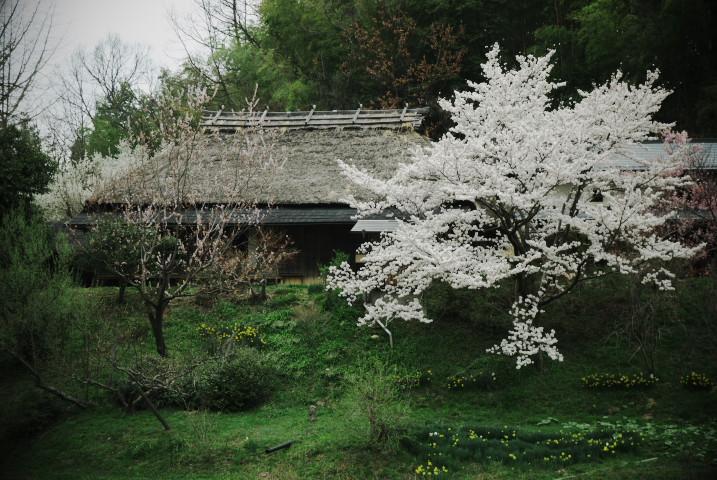 谷村家の萱葺屋根(中川村)