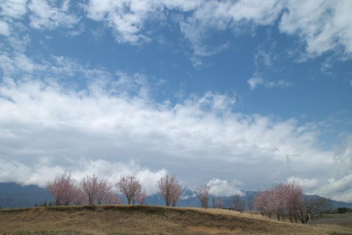 中川村の無名の桜樹(中川村)