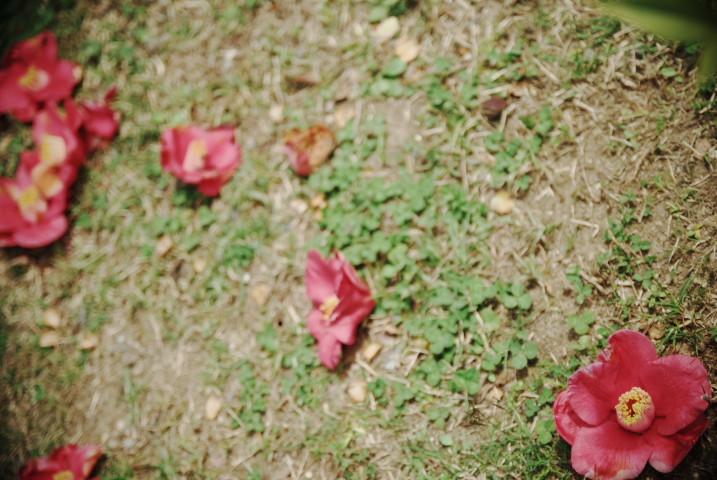 中川西小学校の桜(中川村)