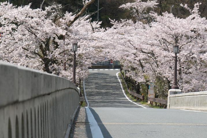 坂戸橋と桜(中川村)