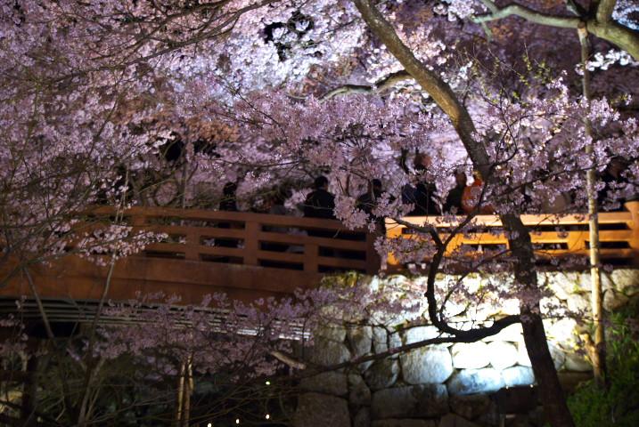 高遠城址公園の夜桜(伊那市高遠町)