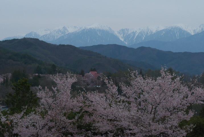 高遠城址公園の桜、ロケハン(伊那市高遠町)