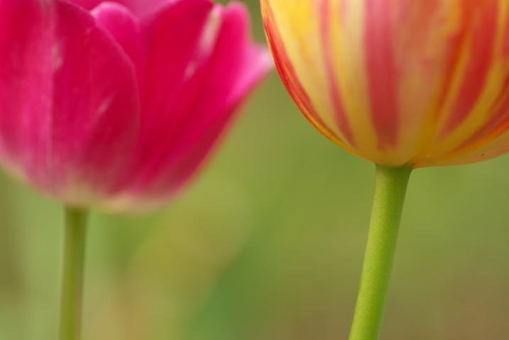 伊那公園の花花(伊那市)