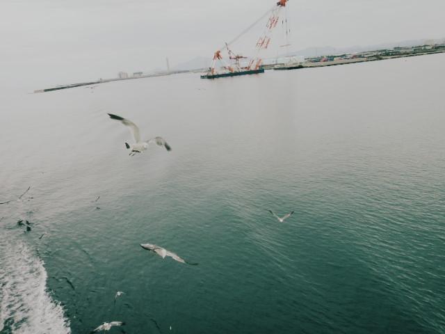 佐渡島旅行、⑥(最終日) - 2010/8/13(金)