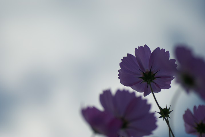 花色たかとお ポレポレの丘(伊那市高遠町) - 2010/10/10(日)