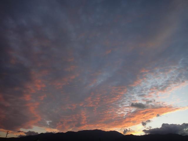 [空の写真] シルエットが鳳凰的な(伊那市) - 2010/9/13(月)