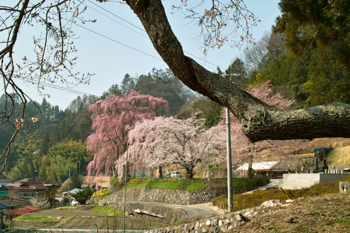 宇治三柱神社の桜(下伊那郡喬木村) - 2011/4/16(土)