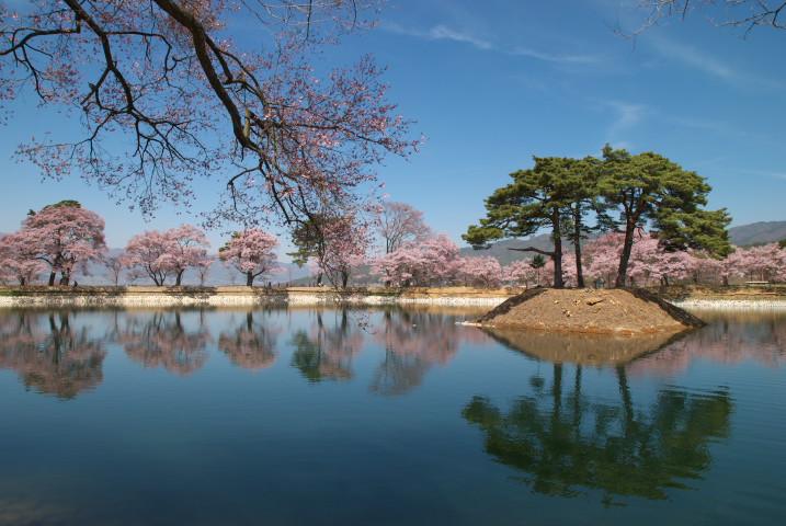 六道の堤の桜(改修終えたよ)(伊那市) - 2011/4/17(日)