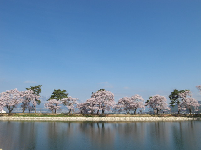 六道の堤の桜(伊那市) - 2011/4/21(木)