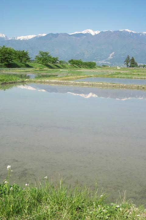 [空の写真] 新緑映え映え(伊那市;青島堤防) - 2011/5/19(木)