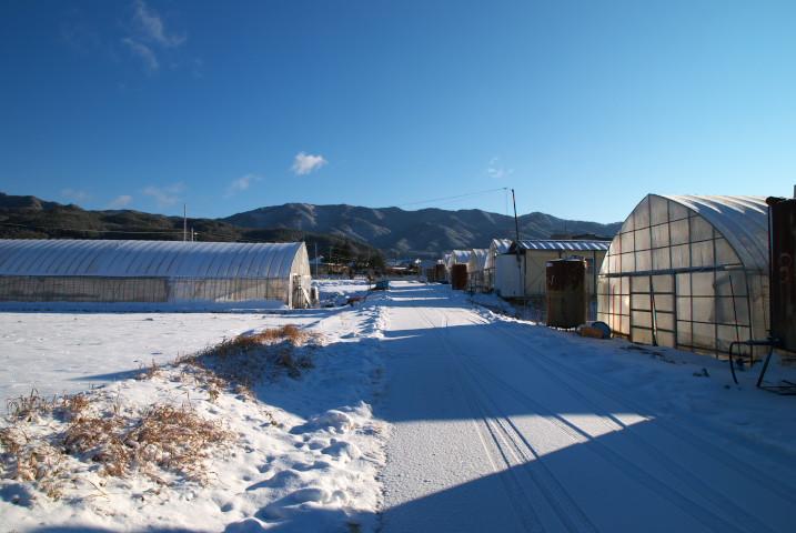 [工事進捗] 足場の撤去された翌日 - 2012/1/24(火)