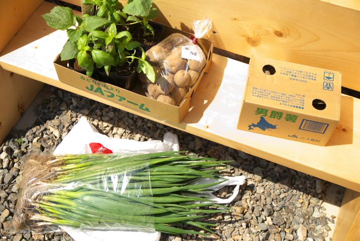 [家庭菜園] お芋と葱とバジルと紫蘇とサイバイマン日和 - 2012/4/21(土)