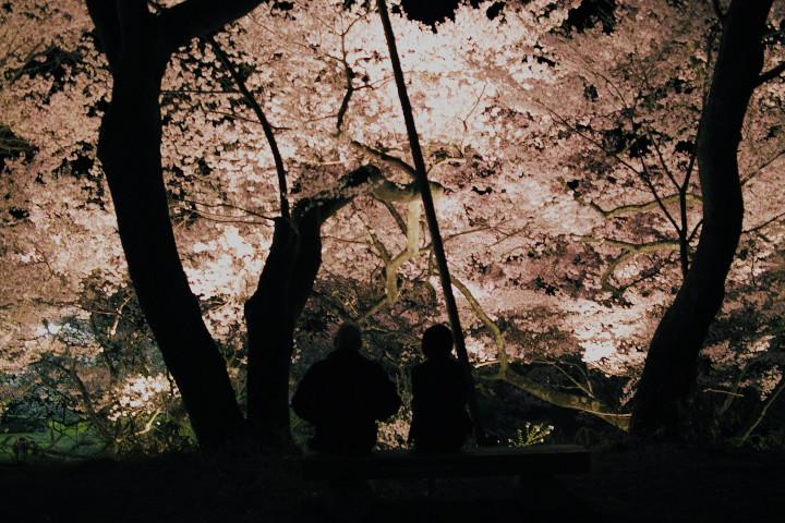 高遠城址の夜桜(伊那市高遠町) - 2012/4/24(火)