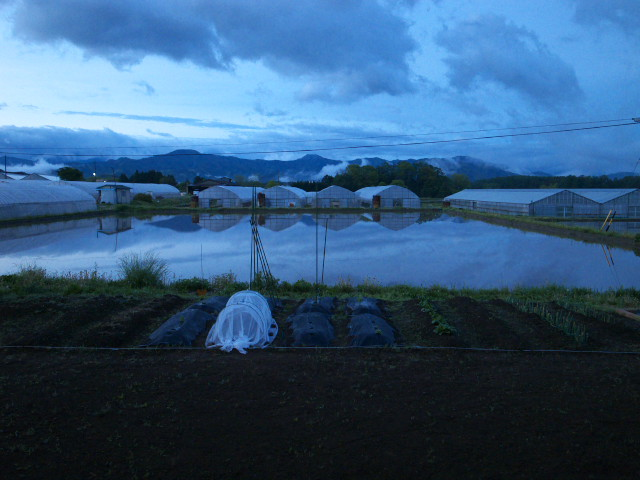 田圃の光景 - 2012/5/16(水)