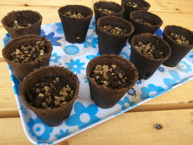 [家庭菜園] にょきわさ系の種蒔とトマトのハンギング - 2012/6/2(土)
