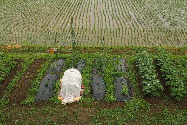 わさわさし始めた家庭菜園