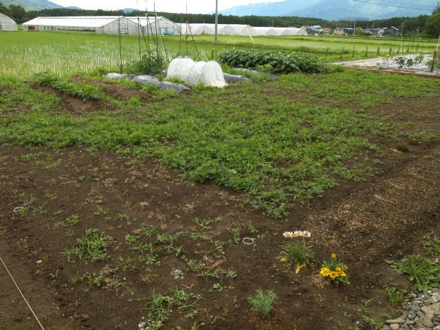家庭菜園日記(伊那市) - 2012/6/10(日)