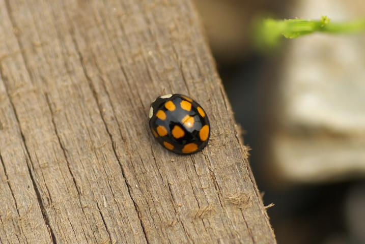 [家庭菜園] 虫と花 - 2012/6/17(日)
