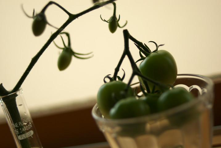 トマトとトマトとトマト - 2012/7/7(土)