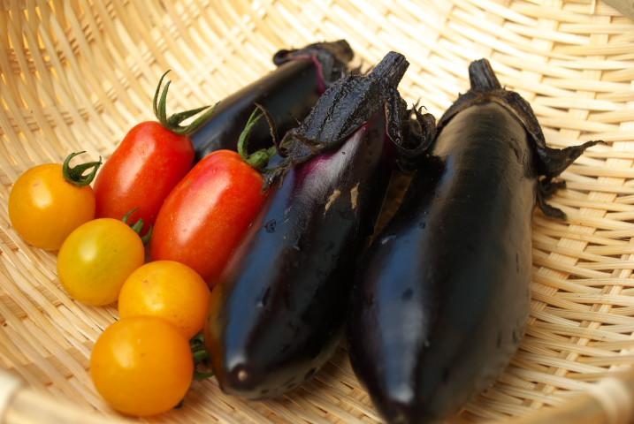 夏野菜の収穫ぼちぼち - 2012/7/10-14