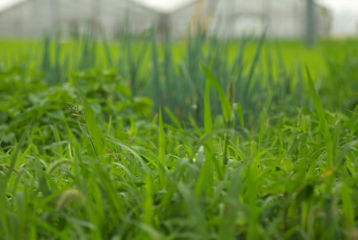 家庭菜園の様子 - 2012/7/14(土)