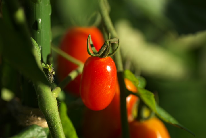 新じゃがの収穫、アスパラの生長など - 2012/7/16-19