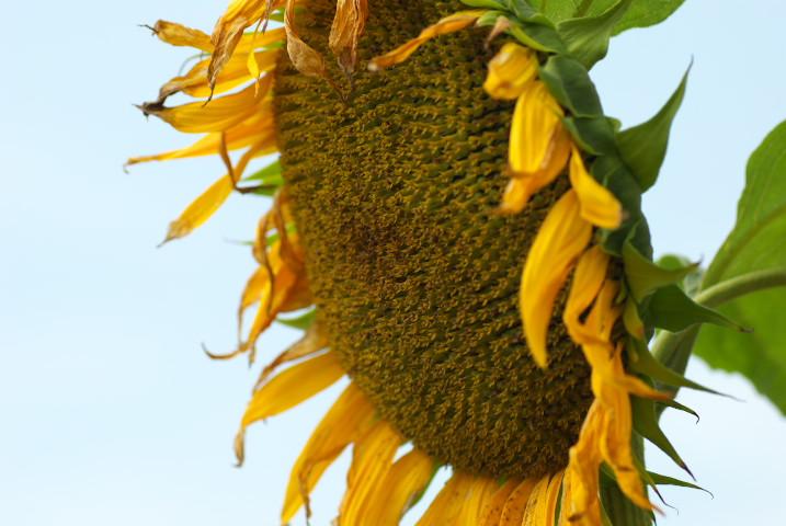 夏、庭の花花 - 2012/7/29(日)