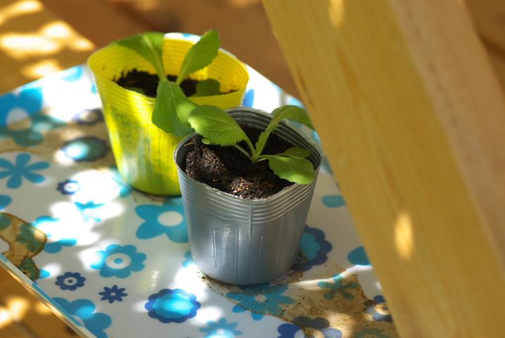 大蒜の植え付けと隣接する田圃のビフォーアフター - 2012/9/16(日)