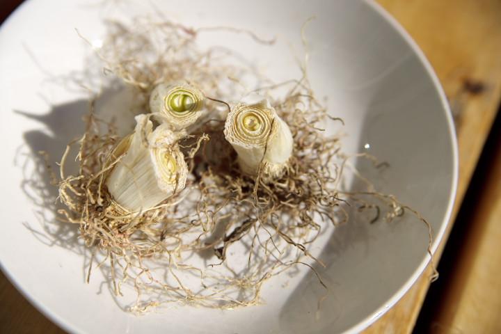 [家庭菜園] ゴーヤカーテンの撤去、葱の根の定植