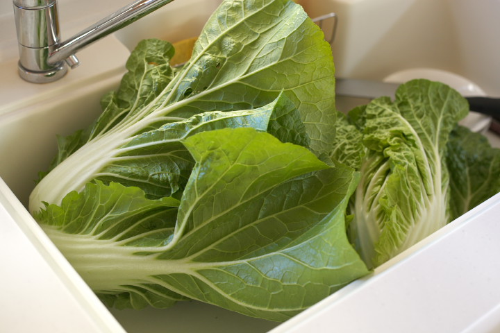白菜の収穫 - 2012/11/18(日)
