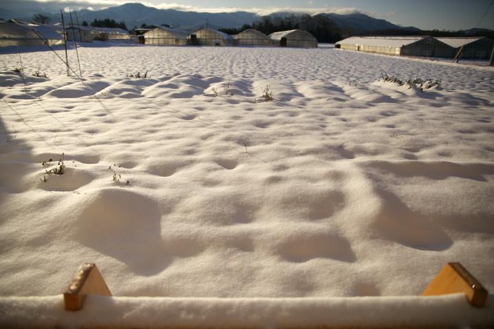 湿雪 - 2012/12/29(土)