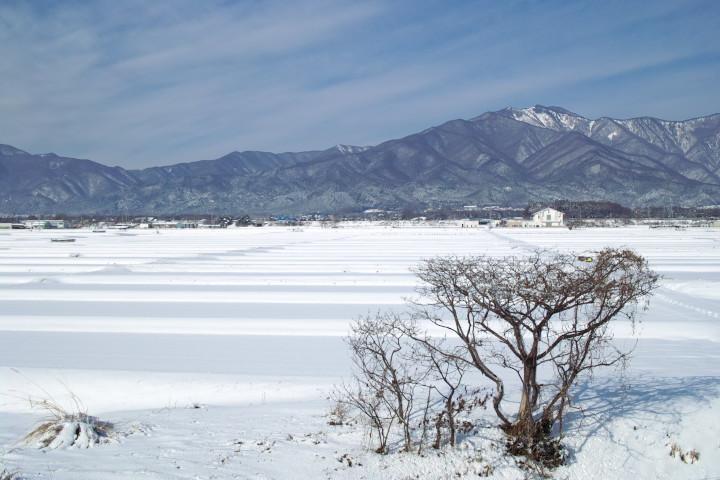 [雪の写真] 白のストライプ - 2013/1/16(水)