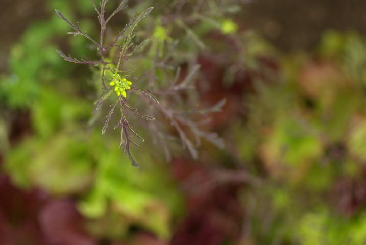 庭の花花とか - 2013/5/29(水)