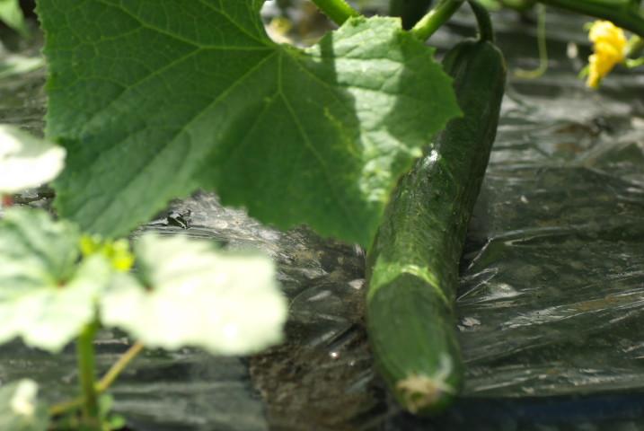 庭の花とか - 2013/6/16(日)