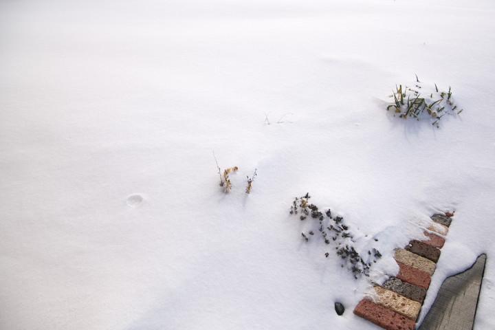 [庭] 深雪と吹き溜まり