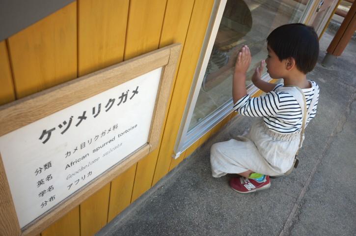 三ツ輪食堂(飯田市)