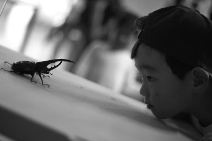 群馬県立ぐんま昆虫の森(群馬県桐生市)