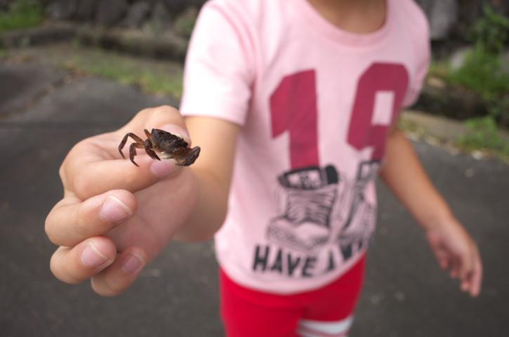 子と沢蟹捕り